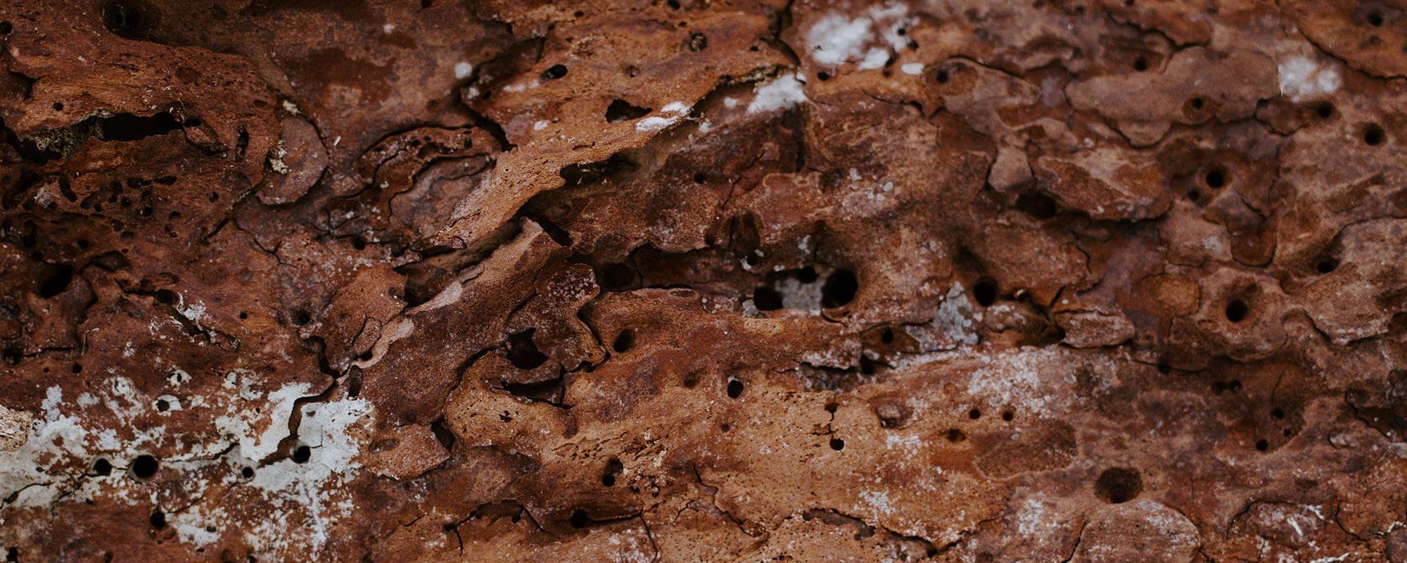 Handy Germain - Traitement Termites - Pays Basque - Landes - Par Annie Spratt